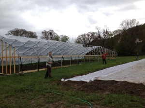 One big project that we were able to tackle was getting plastic over the hoop house. Here Jeff, Kyle, and Christie are pulling the plastic over the top