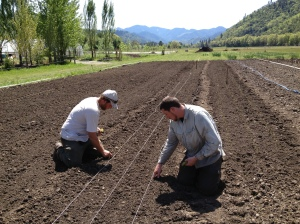 Jeff and Kyle are planting onions, trying make sure the roots point down