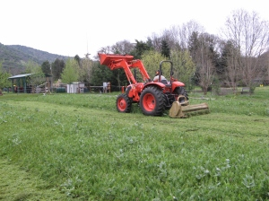 Jeff is mowing and tilling in another section of cover crop for another plant out in the end of April.