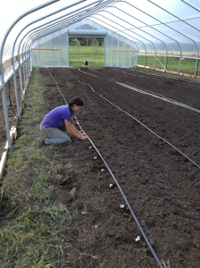 We finally planted in the hoop house! Anna is planting zucchini and cucumber plants. We also planted tomatoes and soon will plant peppers, basil, and eggplant