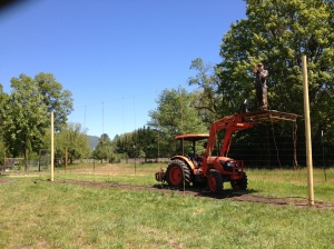 Jeff is doing a trial with a few different varieties of hops. Kyle helped him build the trellis