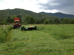 Mowing the hay! People have told us that this year was one of the earliest hay harvests ever