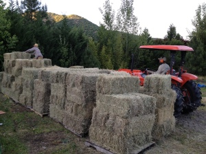 Here Jared and Jeff are stacking the hay so we can cover it with a tarp when it rains