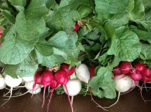 Radish and turnip bundles