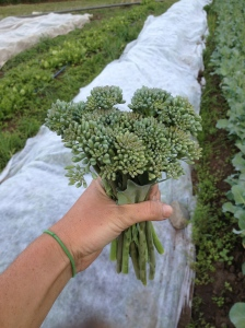 A beautiful broccoli raab bouquet