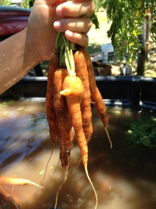 More carrot art... a little bird face