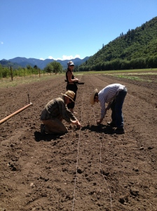 A big plant out in the new summer field. Melons, basil, kale, chard, broccoli, lettuce, and sunflowers.