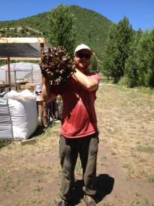 The lettuce is bigger than Jeff's head!