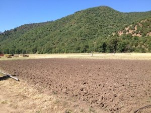 The field where the garlic and onions were once growing has since been tilled. We will soon plant our fa