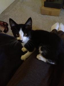 We got a new farm kitty! Meet Charlie. He is 11 weeks, super affectionate,