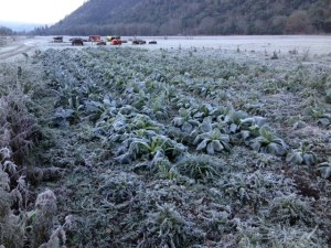 We've been getting some heavy frost