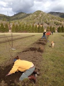 And thanks to Jess, Siigo, and Carol, we got all 200 fruit and nut trees planted before the big rains hit