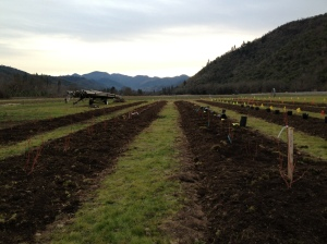 We also planted over 200 blueberry bushes of all different varieties. There is nothing like blueberries