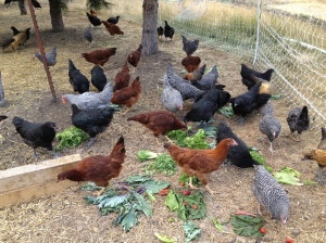 And so did the chickens!