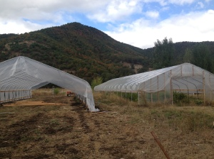 Thanks to the NRCS we built another hoop house. We discovered what a big difference the hoop houses make in extending the season and protecting summer crops from weather and pest damage.